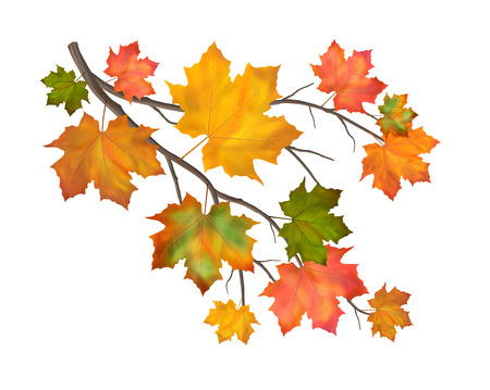 Multicolor vector autumn branch of maple leaves