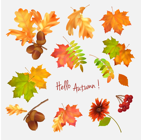 Autumn vector collection of fall leaves on white background