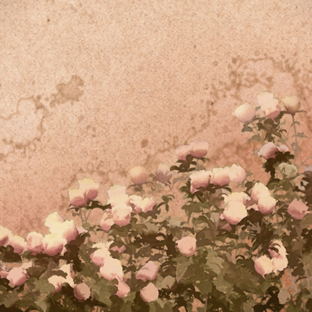 bush: Painting rose bush on grunge canvas in vintage style