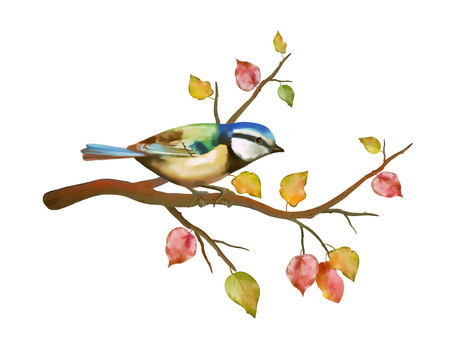 tit: Watercolor hand drawn picture of bird tit on autumn branch Stock Photo