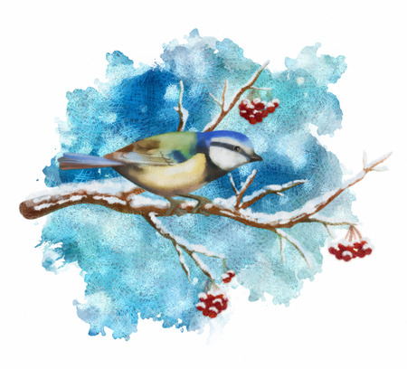 rowan: Pastel winter picture of bird tit, rowan branch on abstract snow background