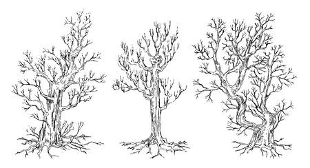 Set of hand drawn trees. Drawing illustration vector