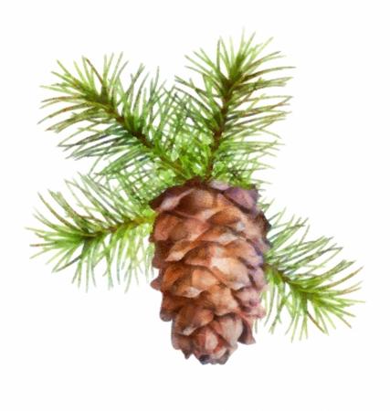 pomme de pin: Dessin de Noël branche d'arbre accroché cône de pin sur fond blanc Banque d'images