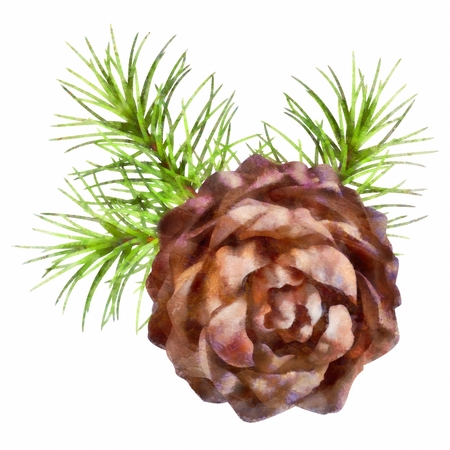 pine needles: Christmas drawing tree branch hanging pine cone on white background Stock Photo