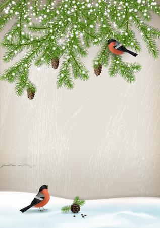 bird: Vector Christmas winter landscape with fir branches, birds bullfinches, cones