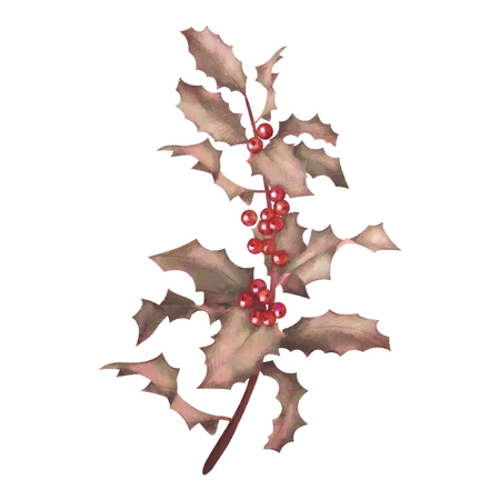 Holly watercolor branch with berries. Christmas traditional symbol