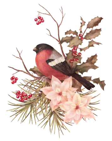 Christmas retro watercolor decorative composition. Bird bullfinch, poinsettia flowers with Rowan and Holly branch on a white background 스톡 콘텐츠