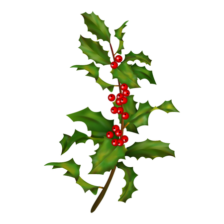 christmas symbol: Holly branch with berries. Christmas traditional symbol