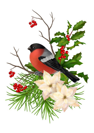 arrangements: Christmas vector decorative composition. Bird bullfinch, poinsettia flowers with Rowan and Holly branch on a white background