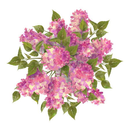 tree top view: Watercolor drawing bouquet of lilac on white background