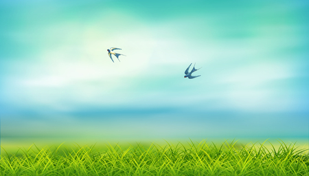 lawn: Vector summer landscape calm and clear. Green grass, birds swallows flying in the sky Illustration