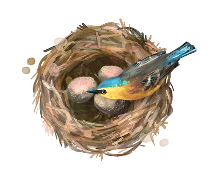 Bird at nest with eggs on a white background. Watercolor illustration Stock Photo