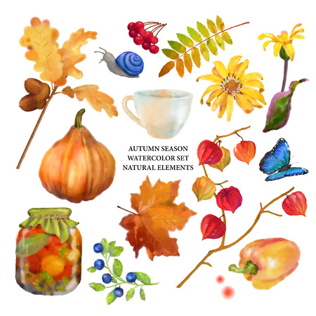 fall leaves on white: Autumn watercolor collection of fall leaves and nature elements on white background Stock Photo