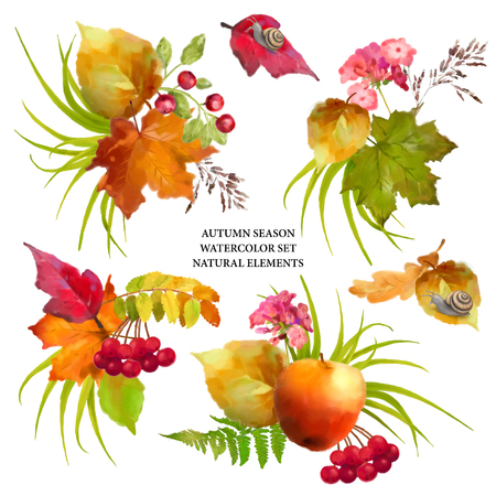 floral elements: Autumn watercolor collection of fall leaves and nature elements on white background Stock Photo