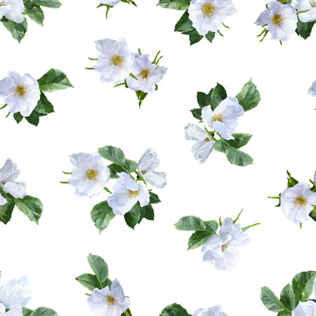 Watercolor seamless pattern with painted white summer flowers Stock Photo