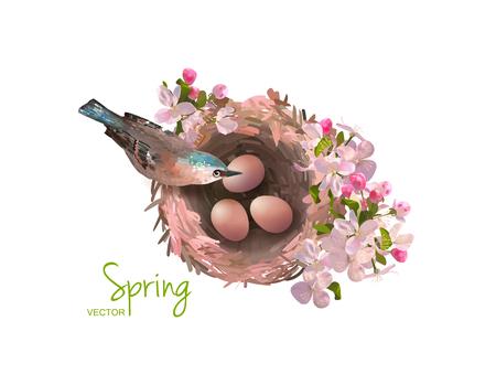 cherries isolated: Bird at Nest Illustration