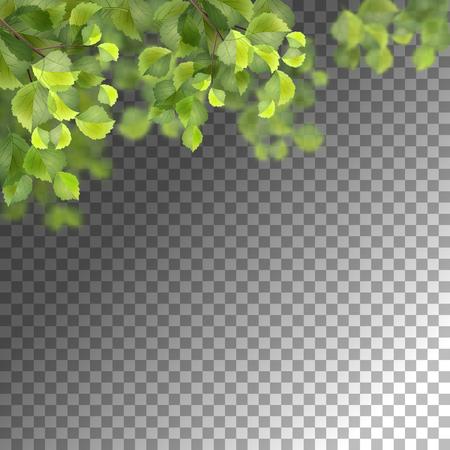 Birch border foliage vector illustration Vettoriali