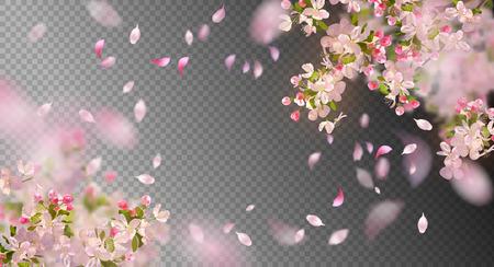 Spring Cherry Blossom Çizim