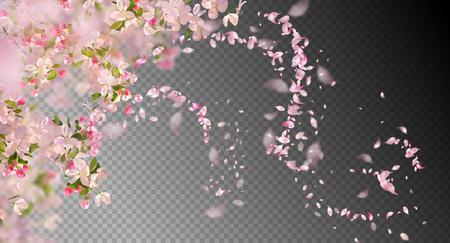 Flores de cerezo en flor de primavera
