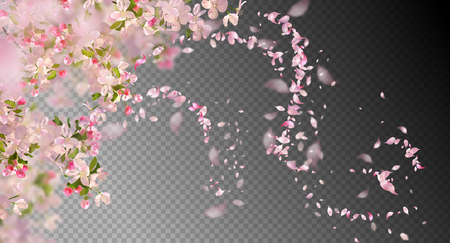 Frühlingsblumen Kirschblüte Standard-Bild - 95896991
