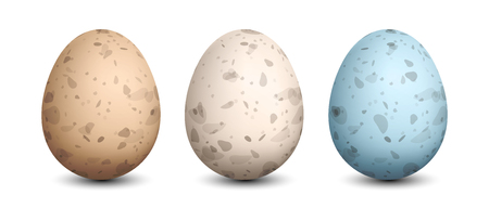 Set of Quail Eggs Vector illustration.