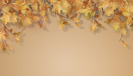 Oak branch with leaves and acorns on white background. Vector autumn illustration