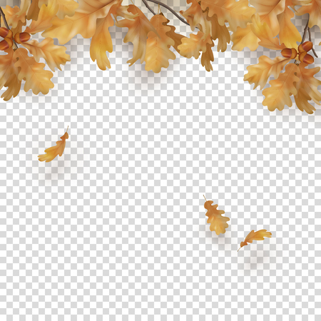 Decorative border with oak branches, autumn leaves and acorns on a transparent background. Vector fall illustration