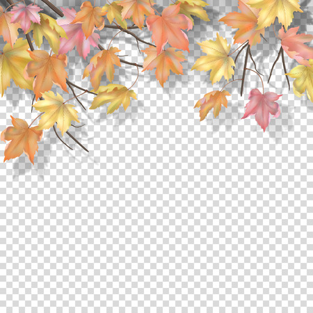 Decorative border with maple branches and autumn leaves on a transparent background. Vector fall illustration