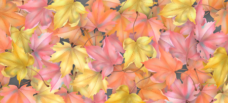 Abstract vector season background with autumn maple leaves