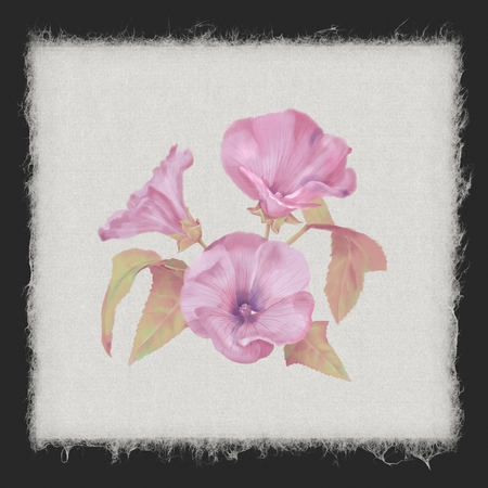 Watercolor Lavatera Flowers Imagens - 109737965