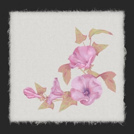 Watercolor Lavatera Flowers