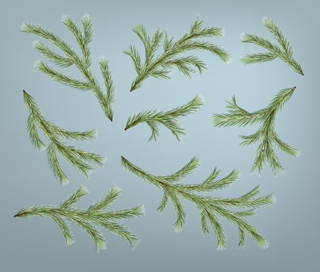Set of realistic detailed Christmas tree branches. Vector fir branches