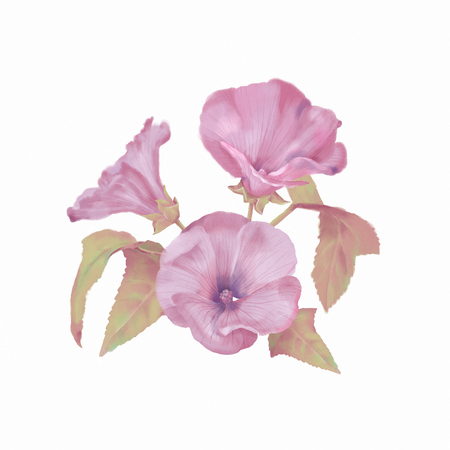 Watercolor Lavatera Flowers