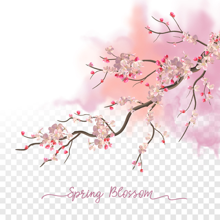 Spring Blossom. Flowering plum branch in springtime on a transparent watercolor background