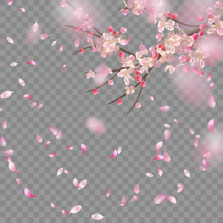 Vektorhintergrund mit Frühlingskirschblüte. Sakura-Zweig im Frühling mit fallenden Blütenblättern und verschwommenen transparenten Elementen Vektorgrafik