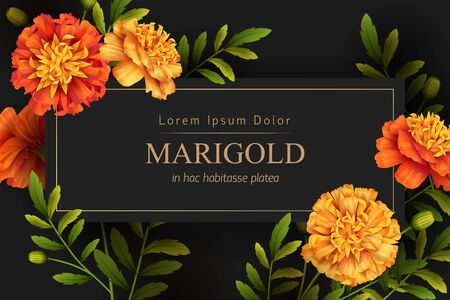 Decorative background with yellow and orange marigolds flowers. Vector illustration