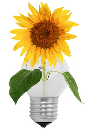 Shattered light bulb and sunflower, isolated on a white background photo