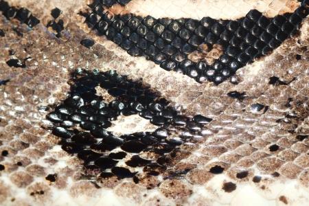Snake Skin photo
