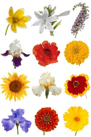 flores moradas: Colecci�n de flor, aisladas sobre fondo blanco