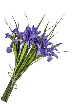 flores moradas: Iris flowers, isolated on white Foto de archivo