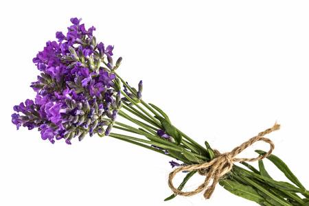 espliego: Ramo de flores de lavanda silvestre violeta, empatado con arco, aislado en blanco Foto de archivo