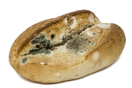 Moldy  bread, isolated on white background