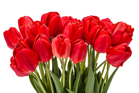 tulips isolated on white background: Bouquet of red flowers tulips, isolated on white background