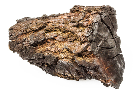 charred: Charred wood with bark isolated on white background