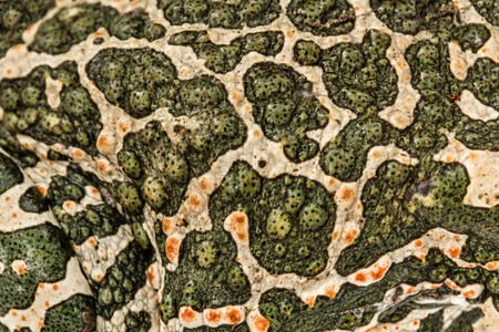 repulsive: Skin of green toad, spotted natural background Stock Photo