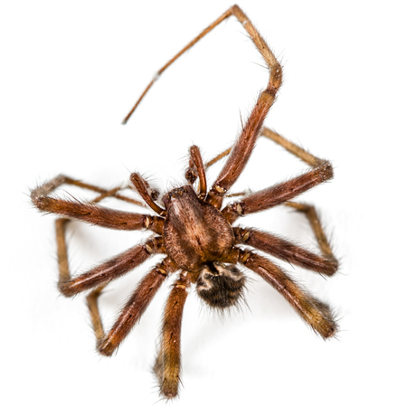 Spider close up, isolated on white background