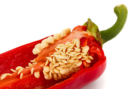 capsaicin: Red hot chili peppe closeupr, isolated on white background
