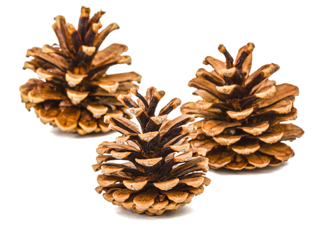 Beautiful pine cones isolated on a white background