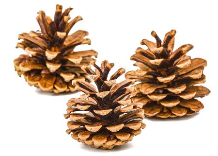 cedro: conos de pinos aislados sobre un fondo blanco