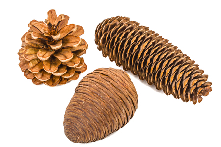 cedro: Beautiful pine cones isolated on a white background